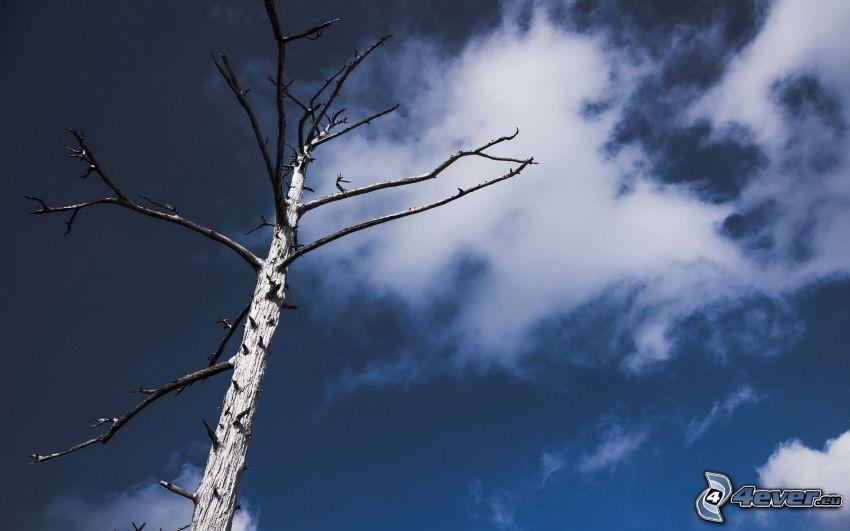 uttorkade träd, himmel