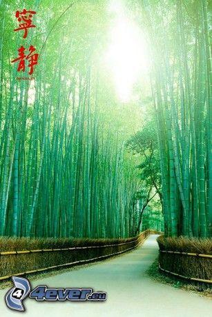 väg, bambuskog, Kina