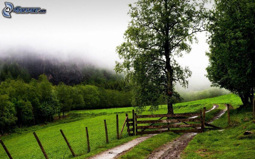 väg, räcke, träd, dimma