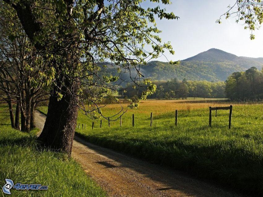 väg, staket, kulle, träd