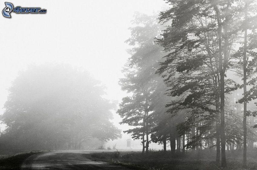 väg, träd, dimma, svart och vitt