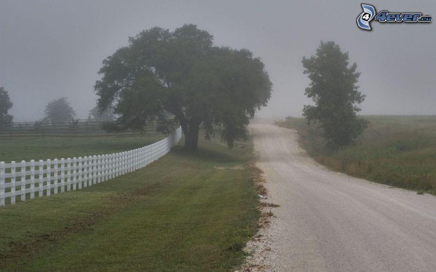väg, träd, dimma, trästaket