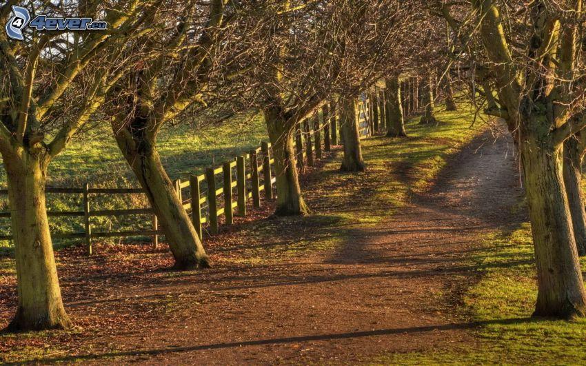 väg, trädgränd, trästaket