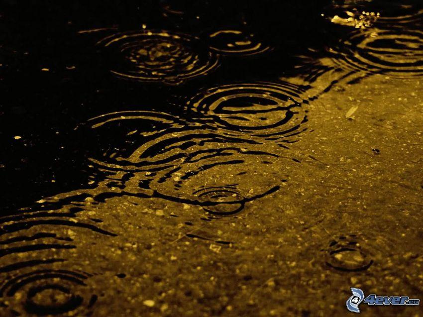 vatten, droppande, regn