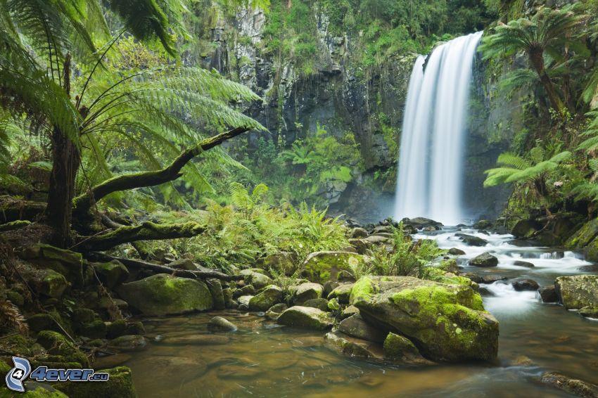 vattenfall, bäck, grönska, djungel