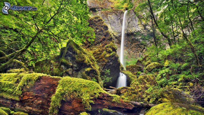 vattenfall, grönska, klippor