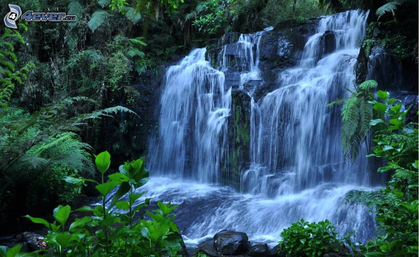 vattenfall, ormbunke, grönska