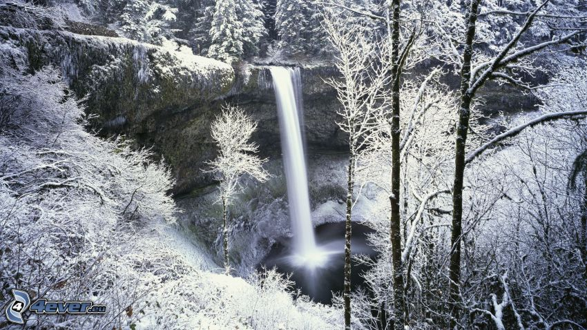 vattenfall, snöklädda träd, skog
