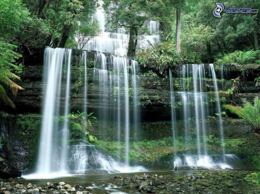 vattenfall, träd, grönska, kaskader