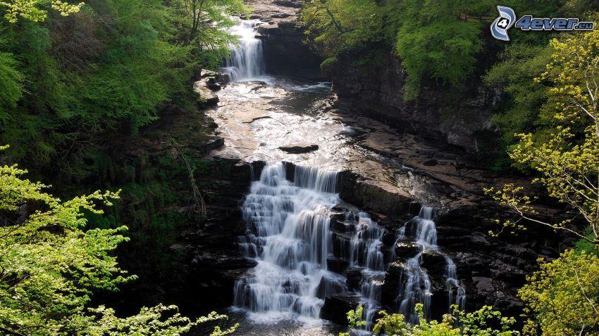 vattenfall, vatten, träd