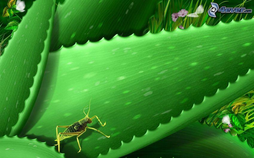 Aloe Vera, gräshoppa, tecknat
