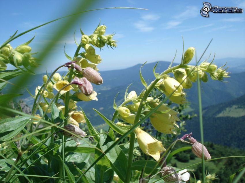 blomma, natur, landskap, himmel
