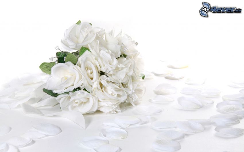 brudbukett, vita rosor, rosenblad