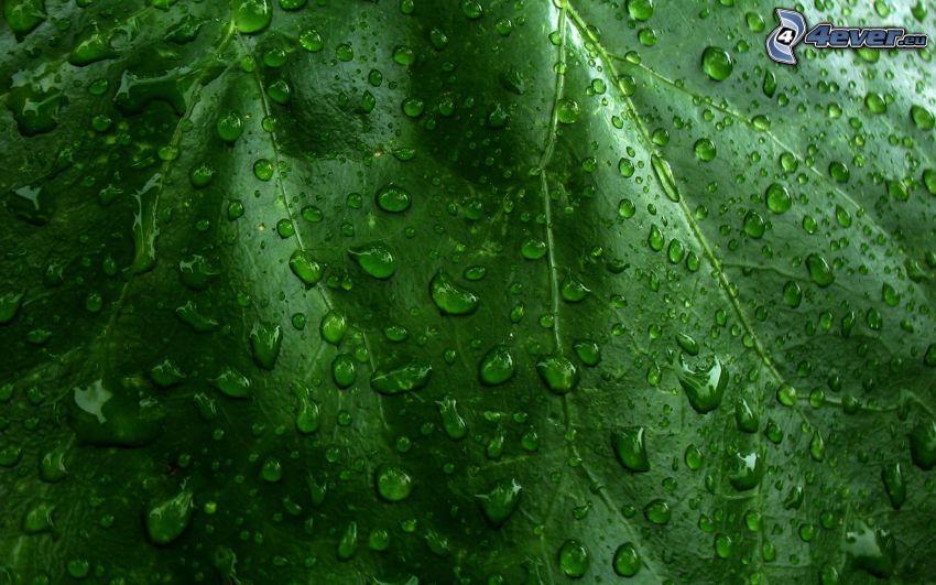 dagg på blad, vattendroppar