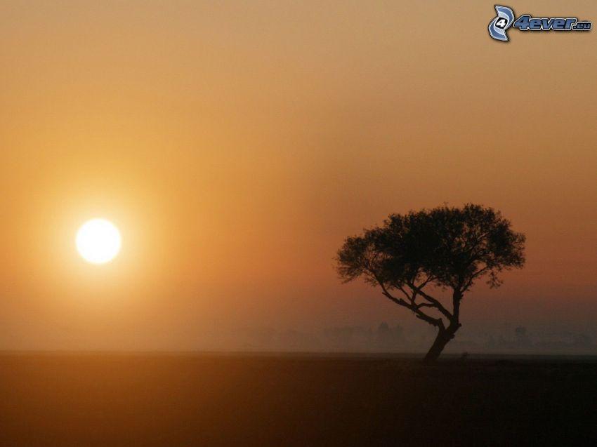 ensamt träd, siluett av ett träd, orange solnedgång