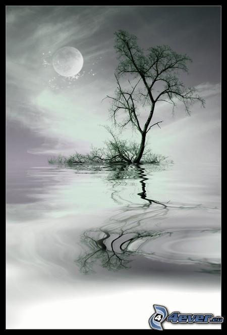 ensamt träd, vatten, spegling, måne