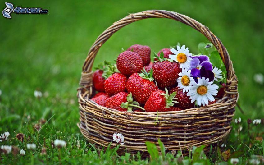 jordgubbar, prästkragar, korg