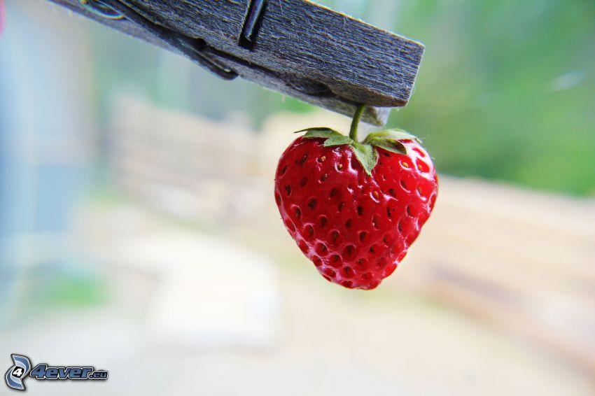 jordgubbe, klädnypa