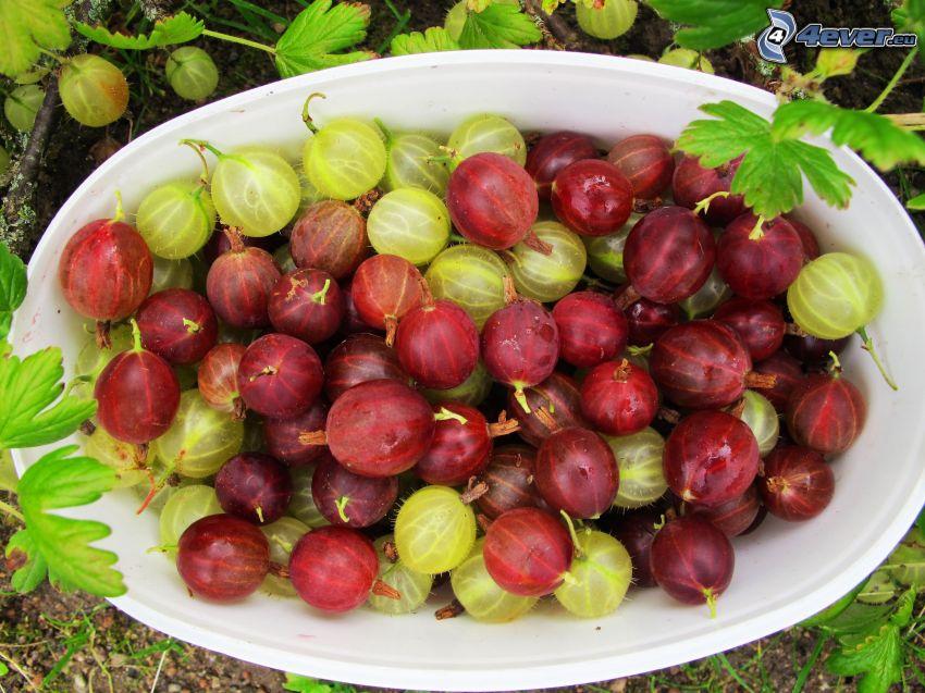 krusbär, skål, gröna blad
