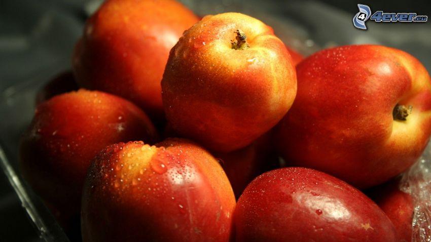 nektariner