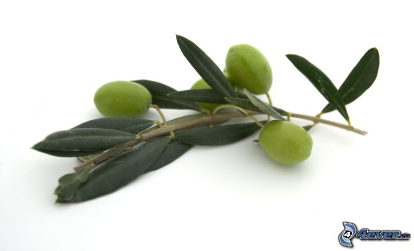 oliver, kvist