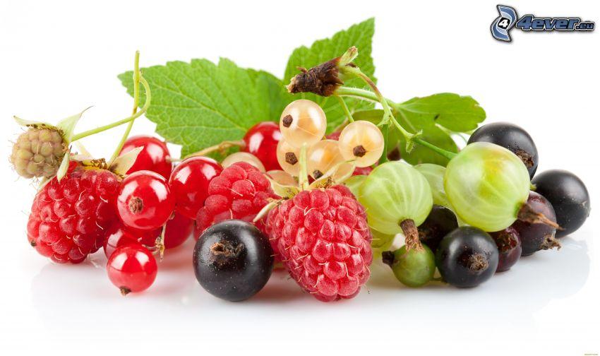 skogsbär, svarta vinbär, hallon, röda vinbär, krusbär