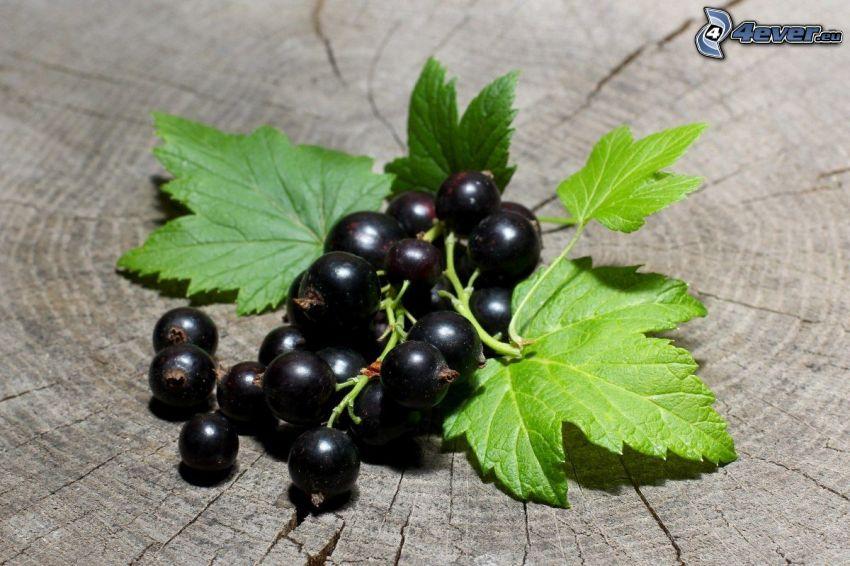 svarta vinbär, gröna blad