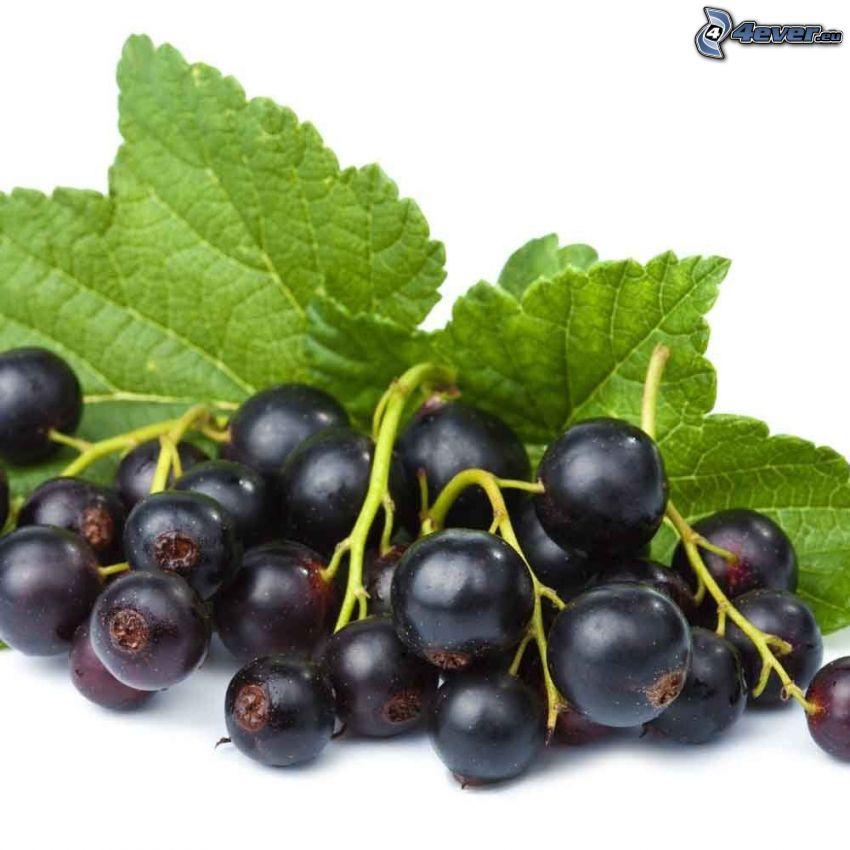 svarta vinbär, löv