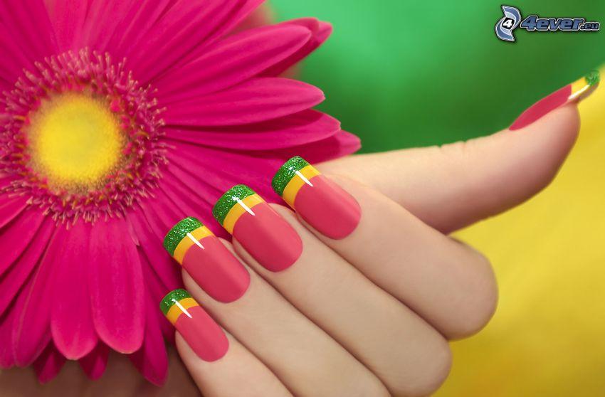 gerbera, rosa blomma, målade naglar