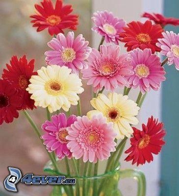 gerberor, blommor, vas