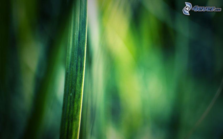 grässtrå