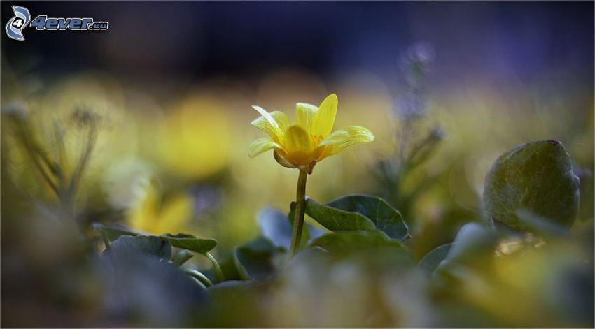gul blomma, löv