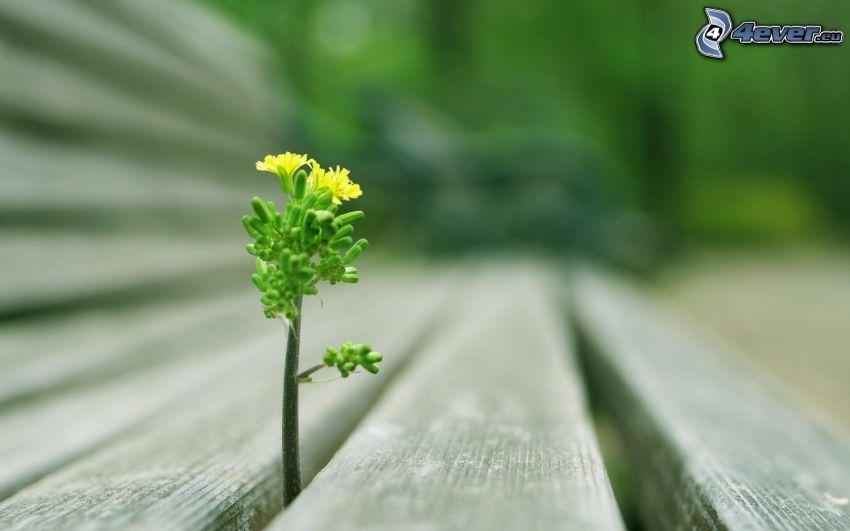gul blomma, växt i trä