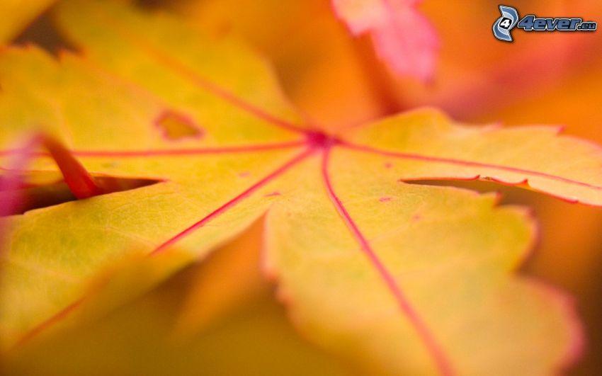 gult löv, höst