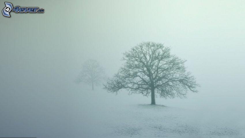 kalt träd, dimma, snö