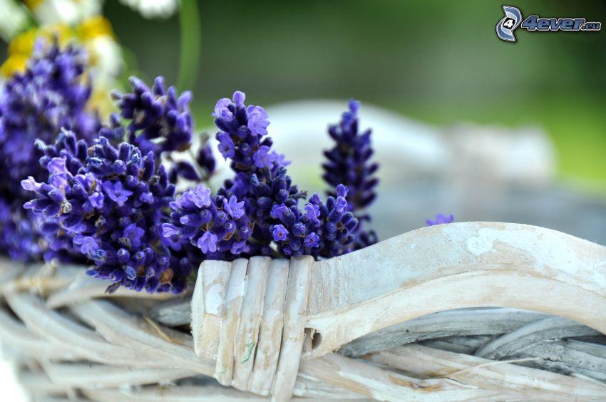 lavendel, blå blommor, korg