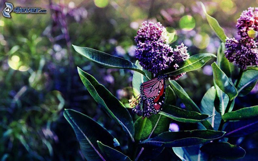 lila blommor, fjärilar
