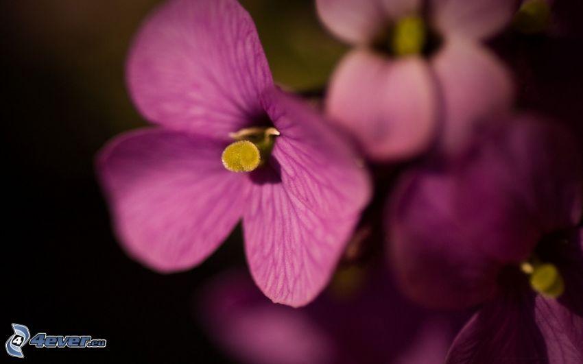lila blommor, orkidéer