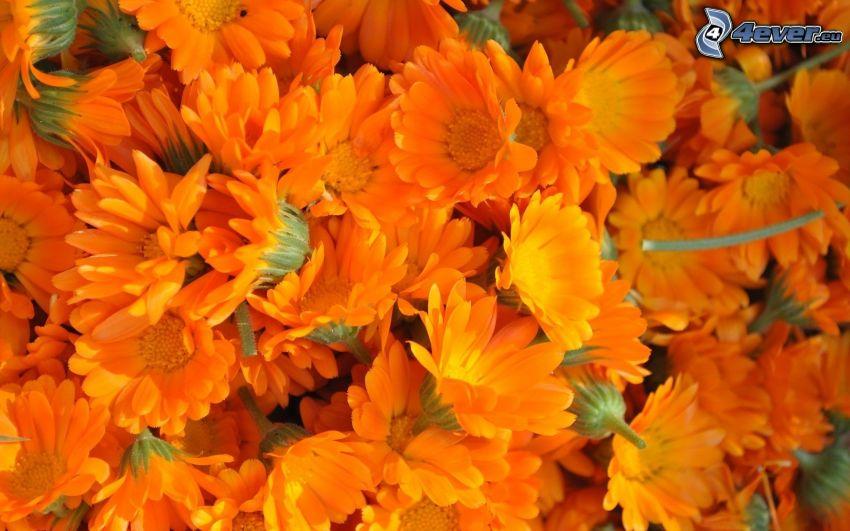 orangea blommor