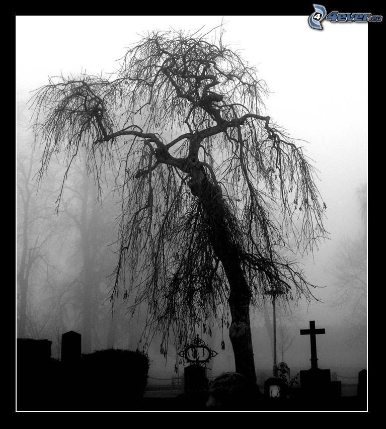 pil, dimma, kyrkogård