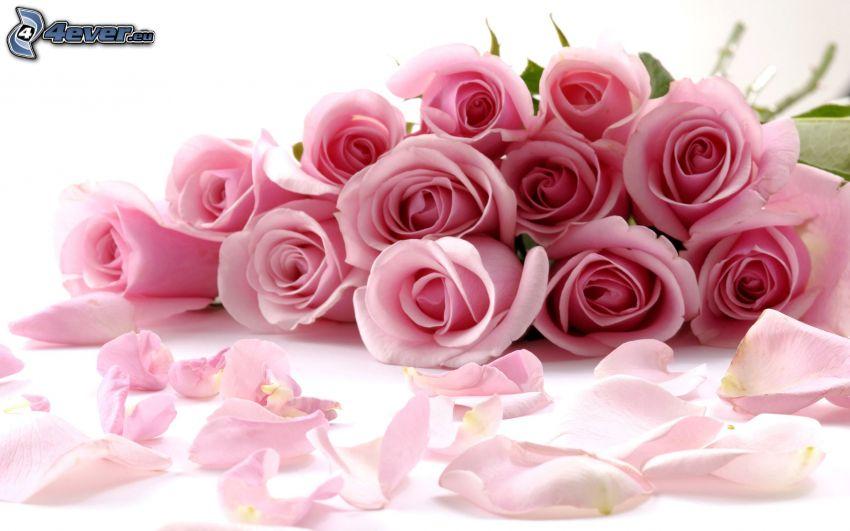 rosenbukett, rosa rosor, rosenblad