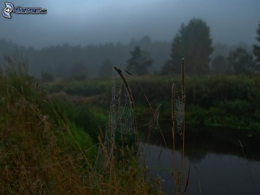 spindelnät på gräs, flod, kväll