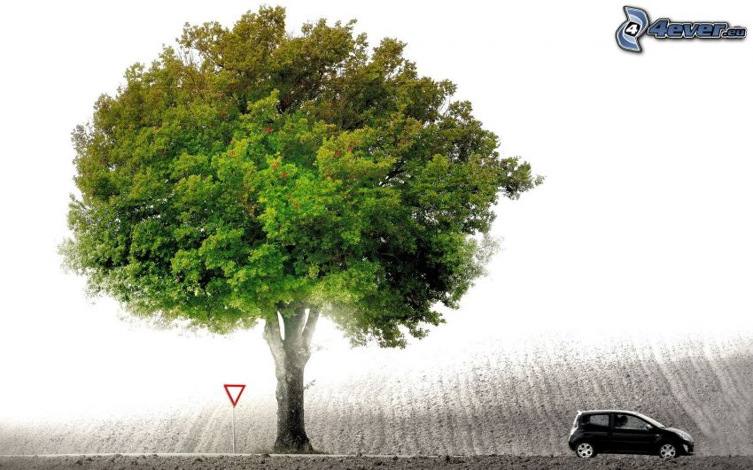 träd över fält, spretigt träd, bil, vägskylt