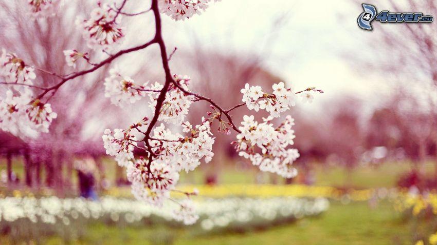 utblommat träd, vita blommor