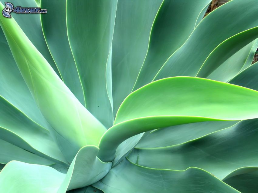 växt, gröna blad