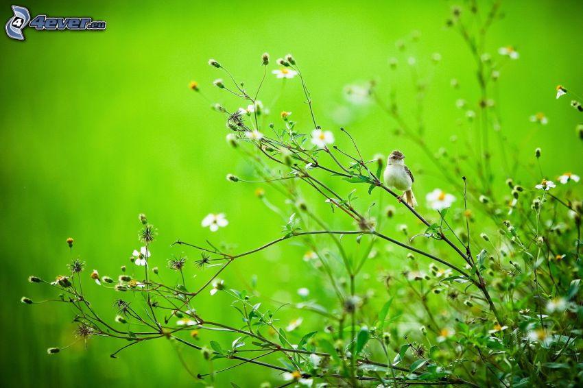 växter, fågel på gren