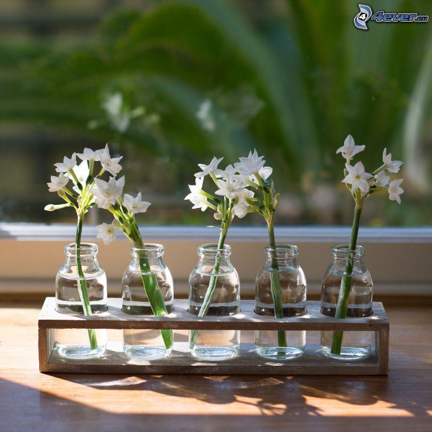 vita blommor, blommor i vas