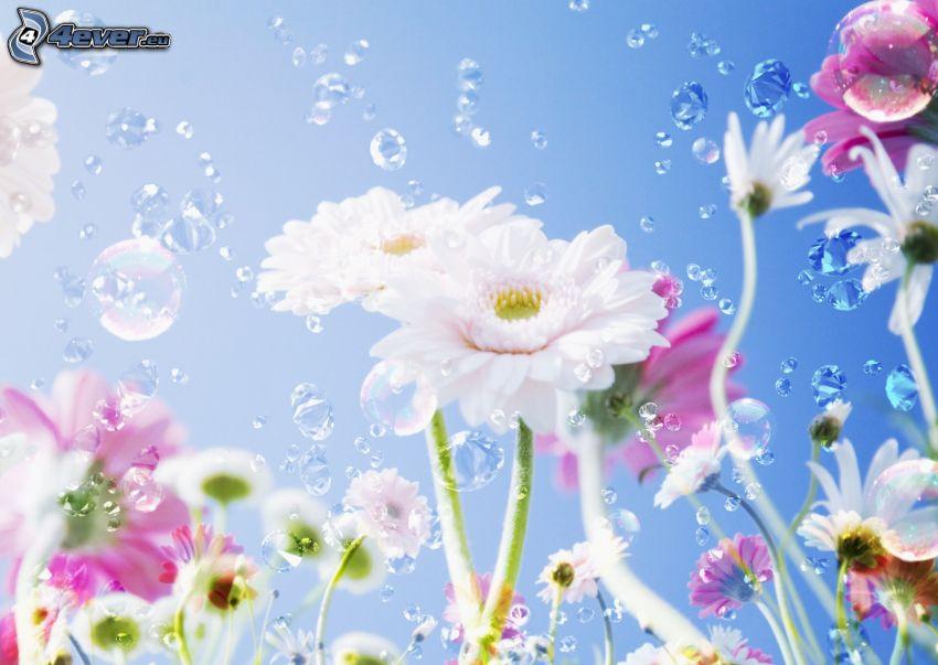 vita blommor, bubblor