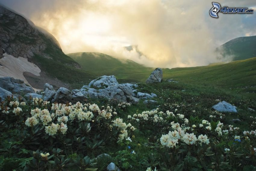 vita blommor, klippor, moln
