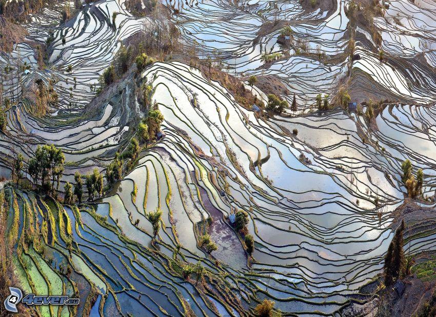 vietnamesiska risfält